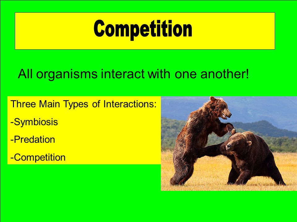 Competition All organisms interact with one another!