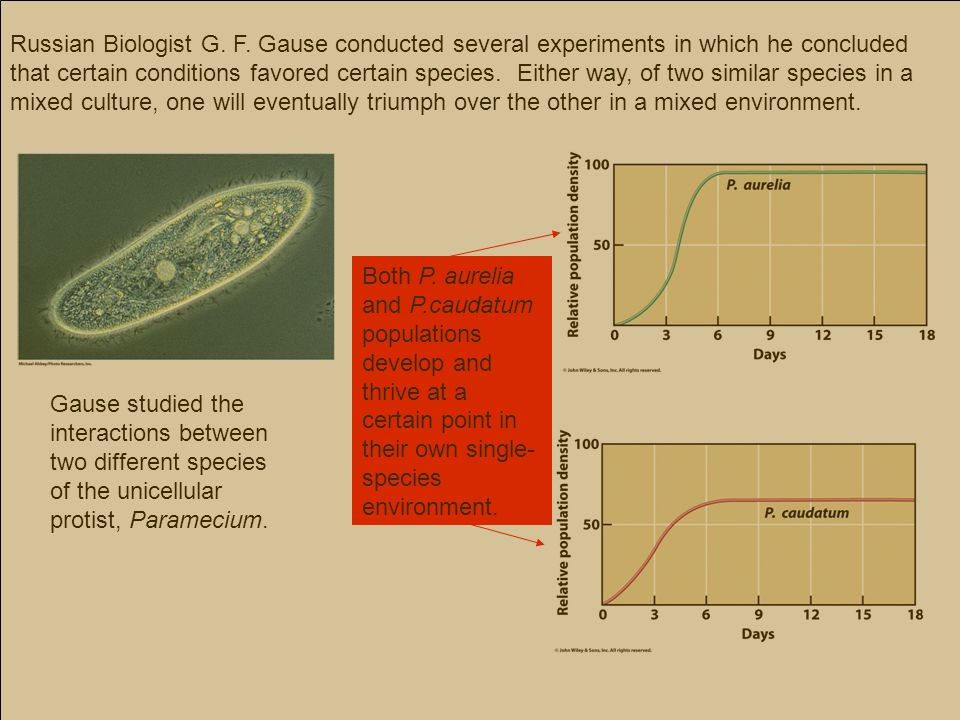 Russian Biologist G. F. Gause conducted several experiments in which he concluded that certain conditions favored certain species. Either way, of two similar species in a mixed culture, one will eventually triumph over the other in a mixed environment.