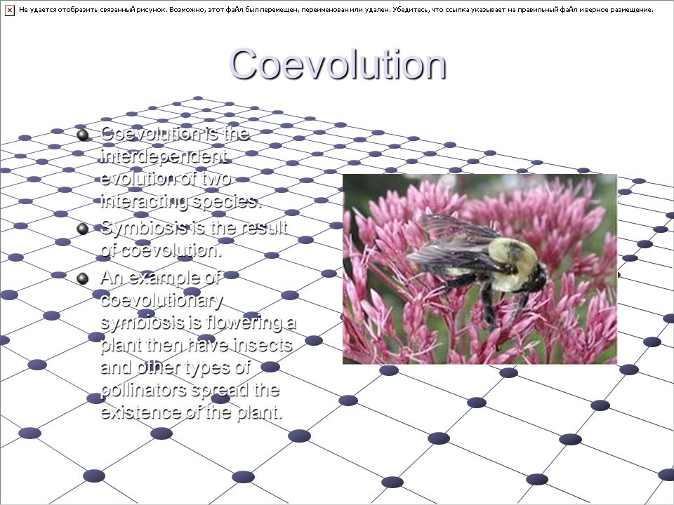 Coevolution Coevolution is the interdependent evolution of two interacting species. Symbiosis is the result of coevolution.