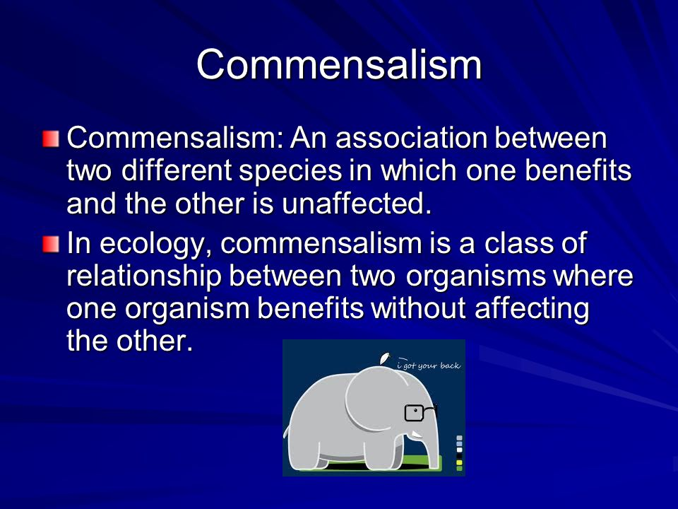 Commensalism Commensalism: An association between two different species in which one benefits and the other is unaffected.