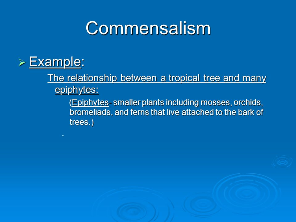 Commensalism Example: