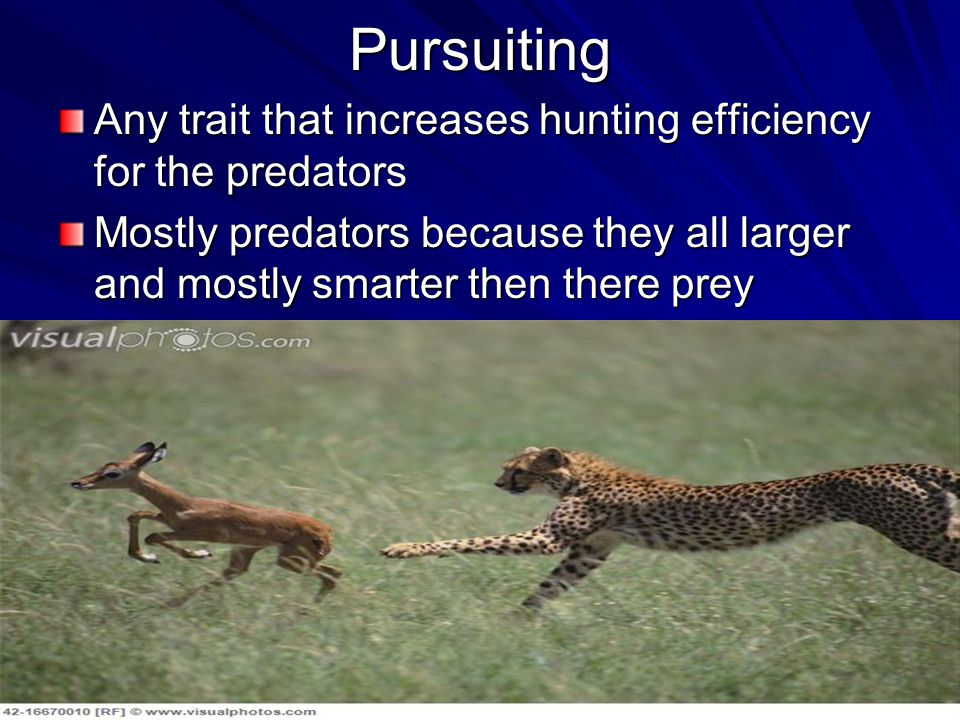 Pursuiting Any trait that increases hunting efficiency for the predators.