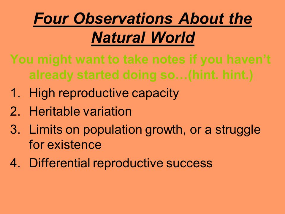 Four Observations About the Natural World