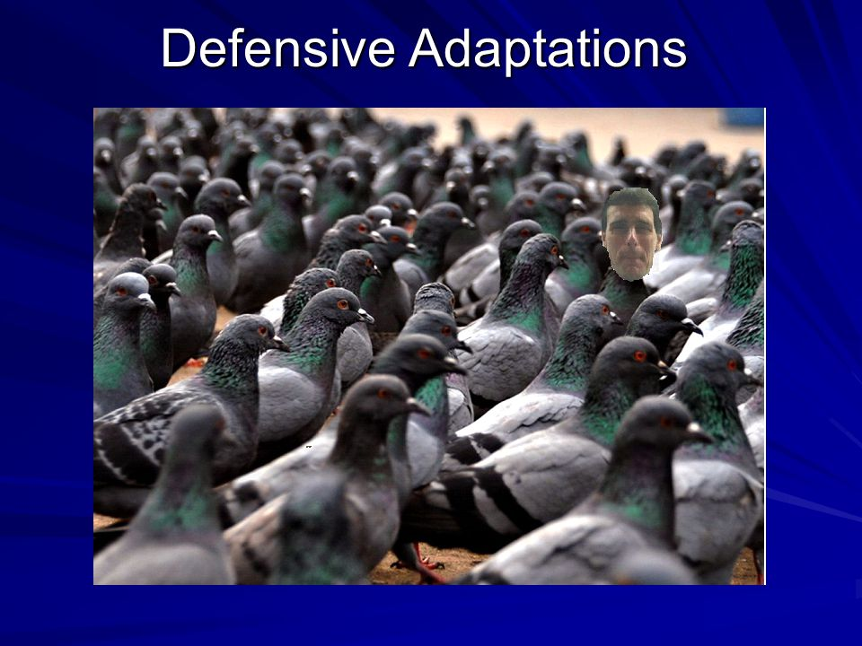 Defensive Adaptations