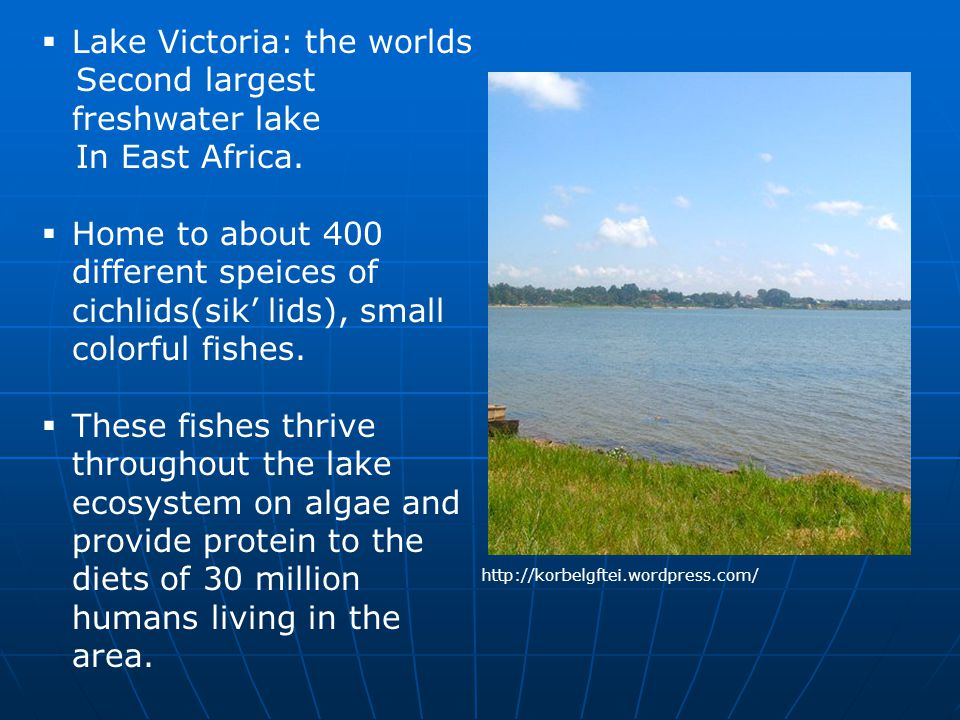 Lake Victoria: the worlds Second largest freshwater lake