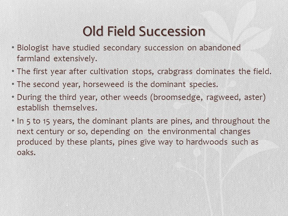 Old Field Succession Biologist have studied secondary succession on abandoned farmland extensively.