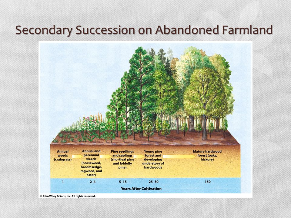 Secondary Succession on Abandoned Farmland