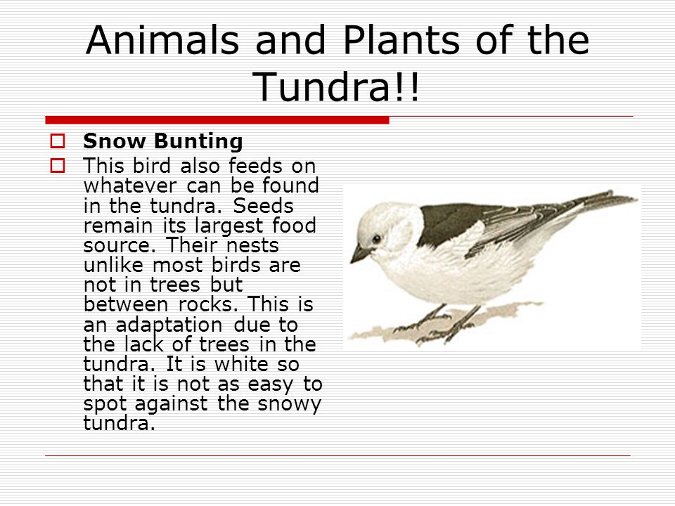 Animals and Plants of the Tundra!!