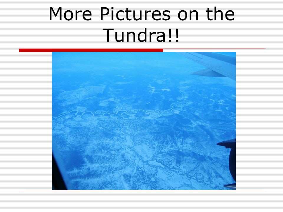 More Pictures on the Tundra!!