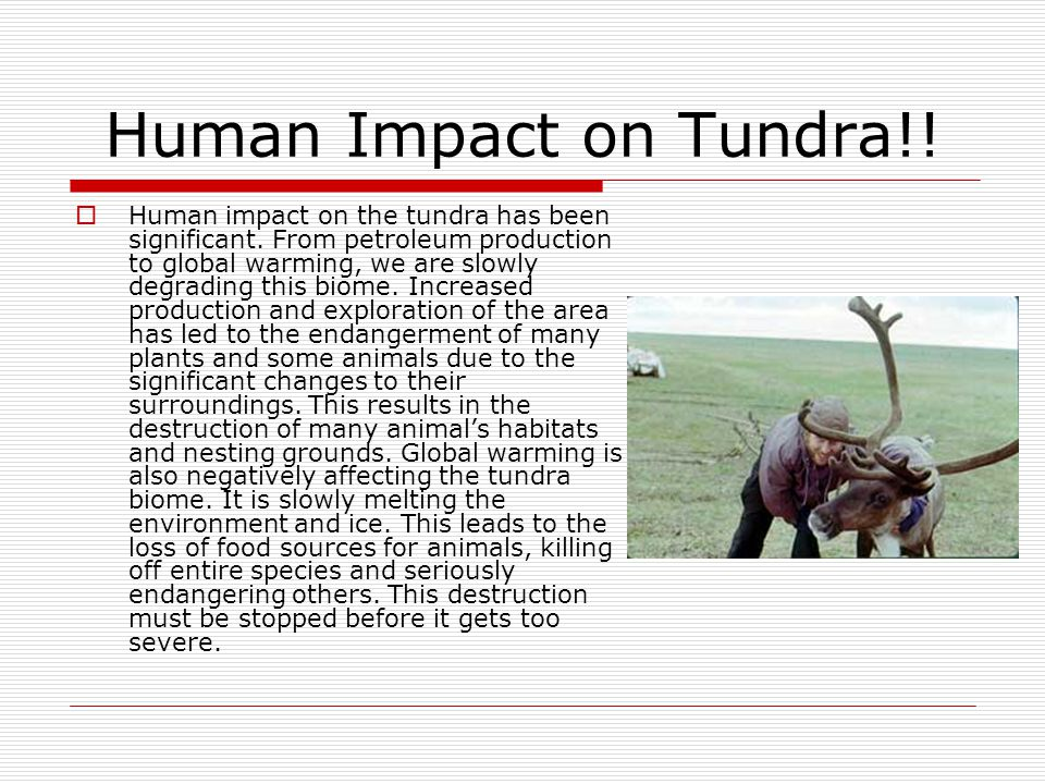 Human Impact on Tundra!!