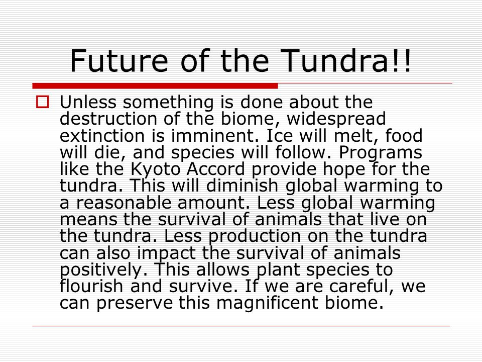 Future of the Tundra!!