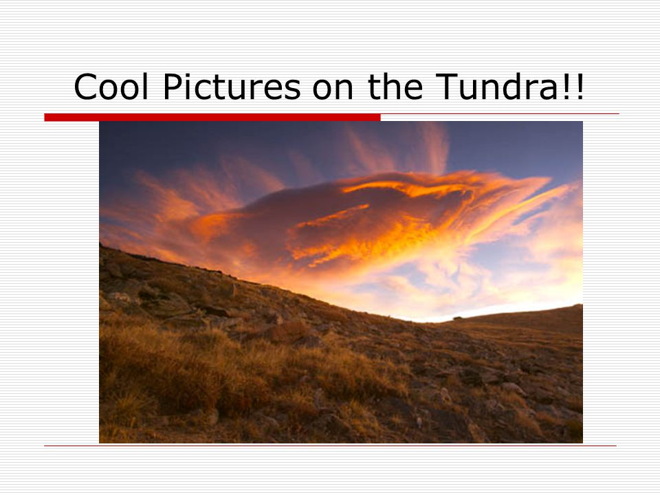 Cool Pictures on the Tundra!!