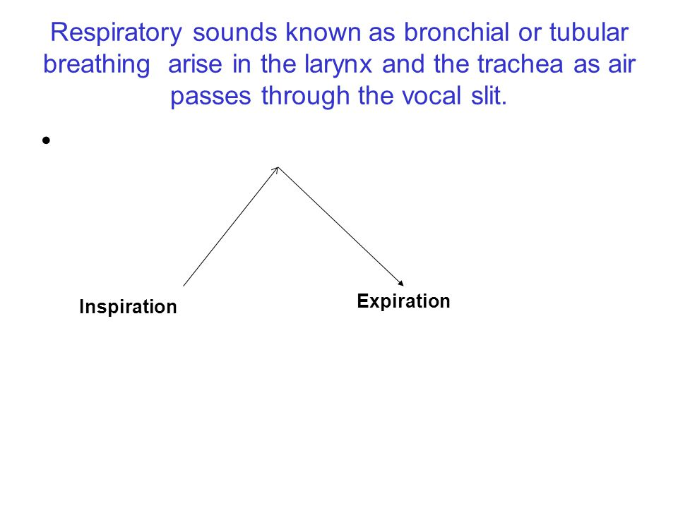 Respiratory sounds known as bronchial or tubular breathing arise in the larynx and the trachea as air passes through the vocal slit.