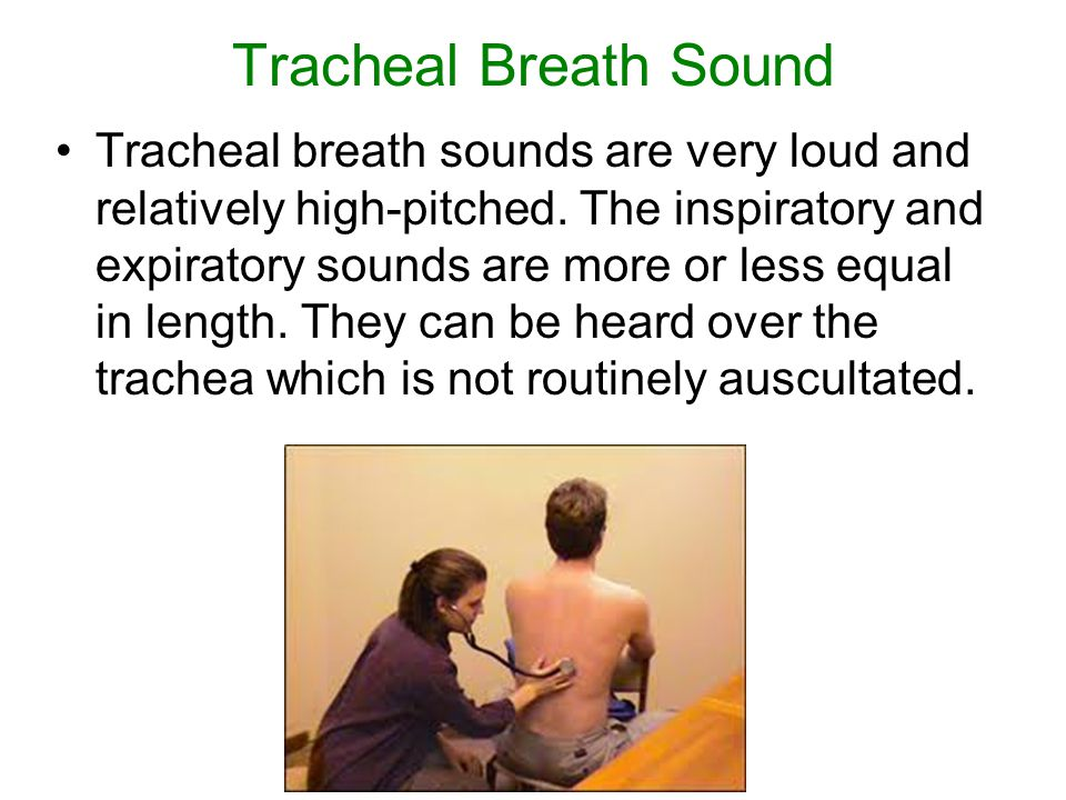 Tracheal Breath Sound