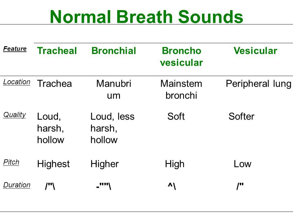 Normal Breath Sounds Tracheal Bronchial Broncho vesicular Vesicular