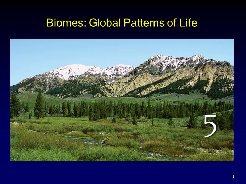 Biomes: Global Patterns of Life