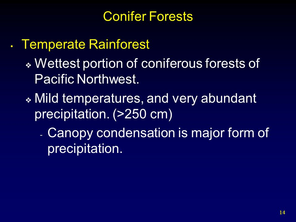 Conifer Forests Temperate Rainforest. Wettest portion of coniferous forests of Pacific Northwest.