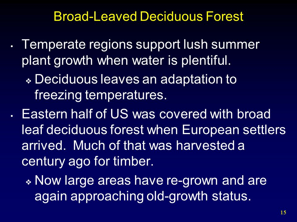 Broad-Leaved Deciduous Forest