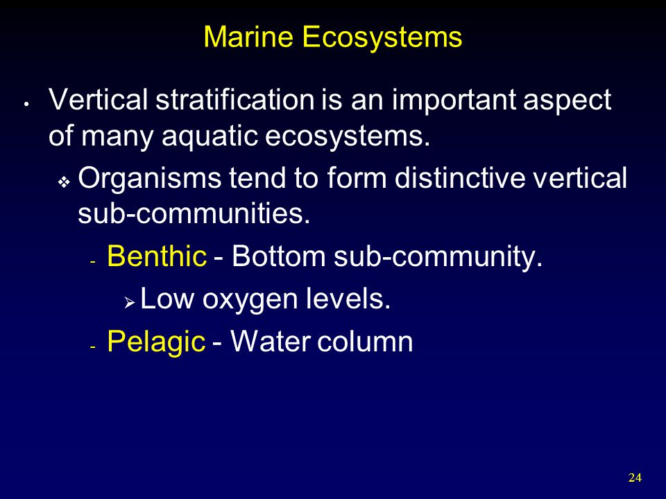 Marine Ecosystems Vertical stratification is an important aspect of many aquatic ecosystems.