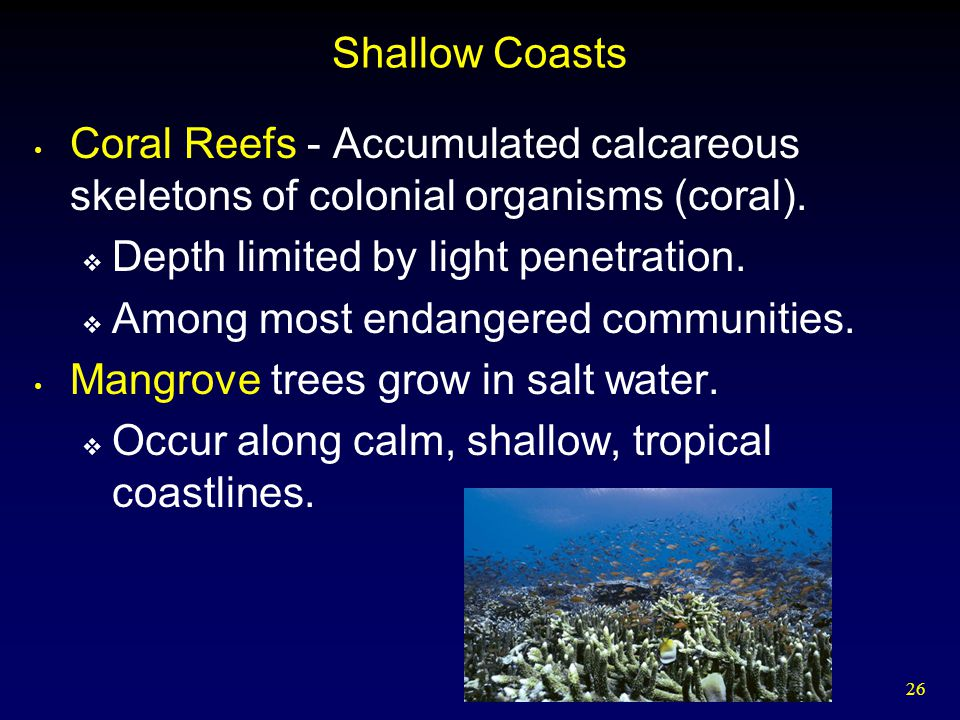 Shallow Coasts Coral Reefs - Accumulated calcareous skeletons of colonial organisms (coral). Depth limited by light penetration.
