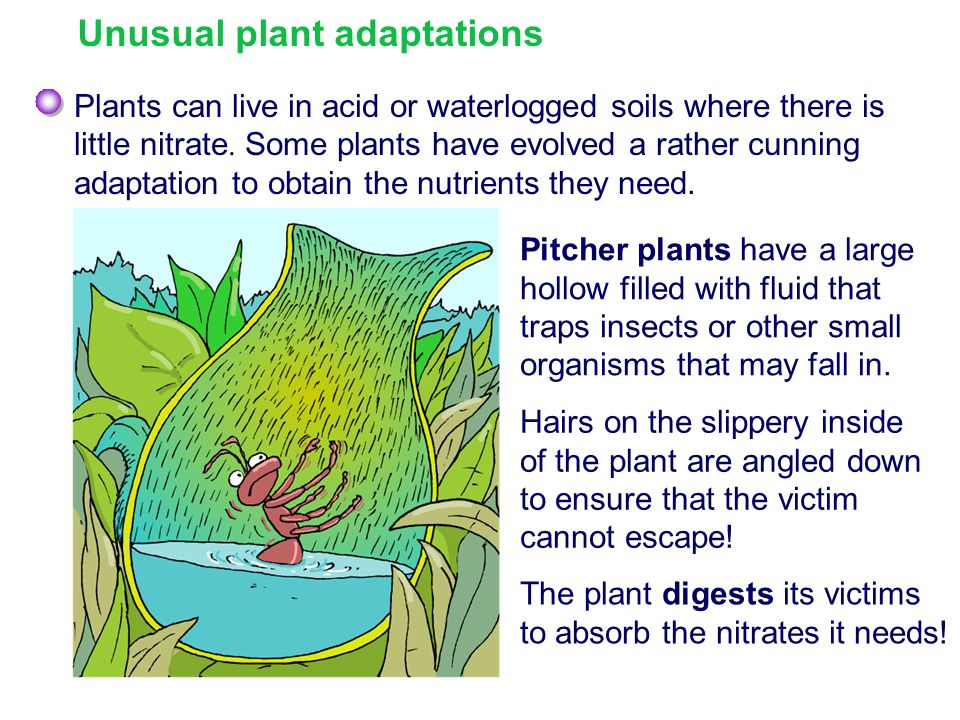 Unusual plant adaptations