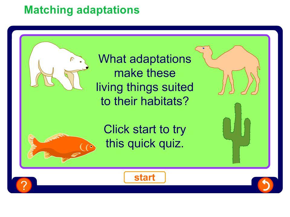 Matching adaptations