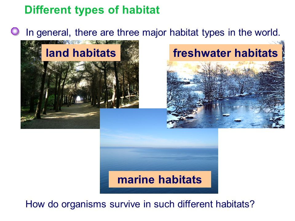 Different types of habitat