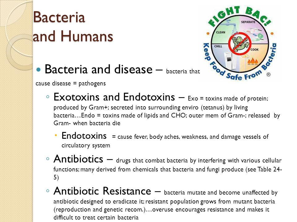Bacteria and Humans Bacteria and disease – bacteria that