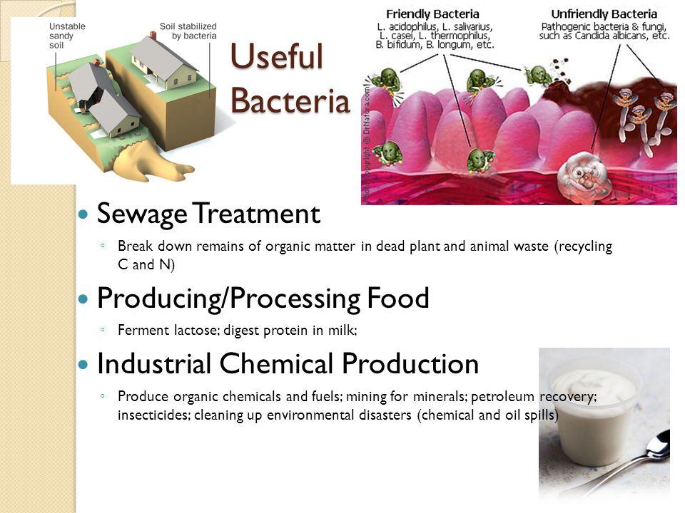 Useful Bacteria Sewage Treatment Producing/Processing Food