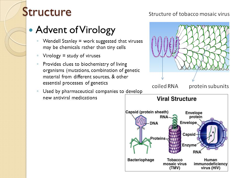 Structure Advent of Virology