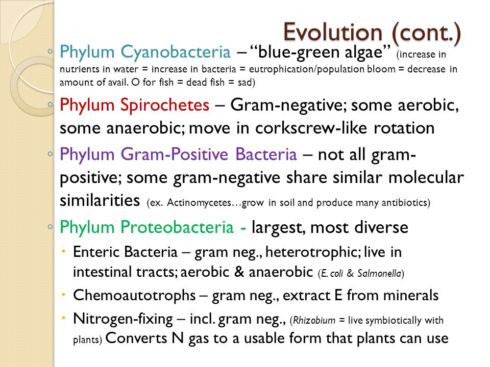 Evolution (cont.)