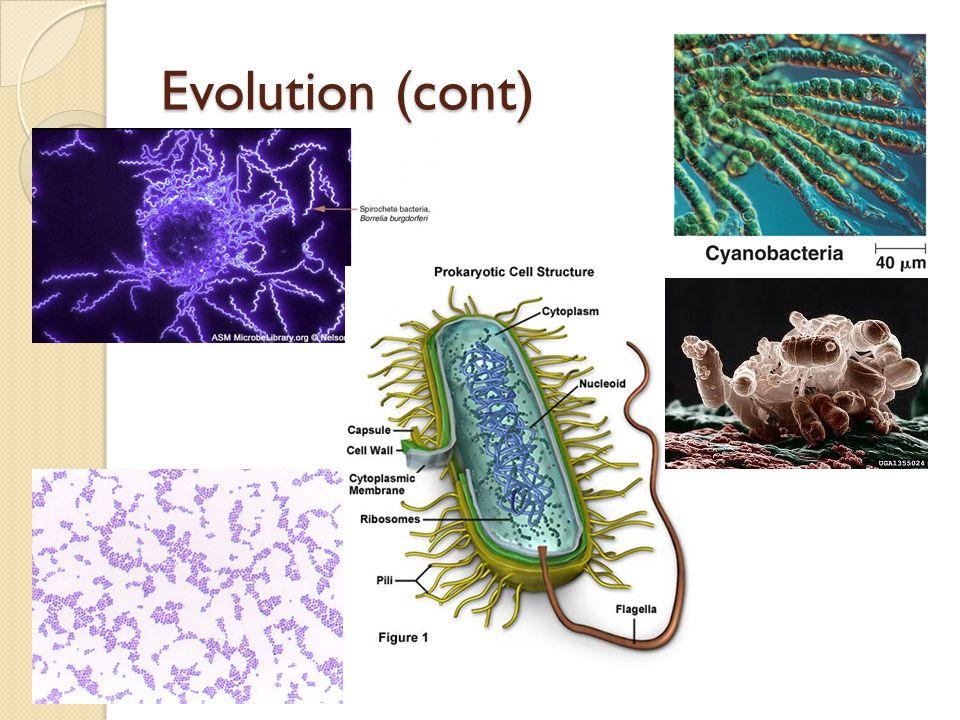 Evolution (cont)