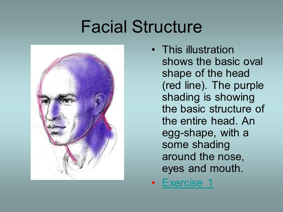 Facial Structure