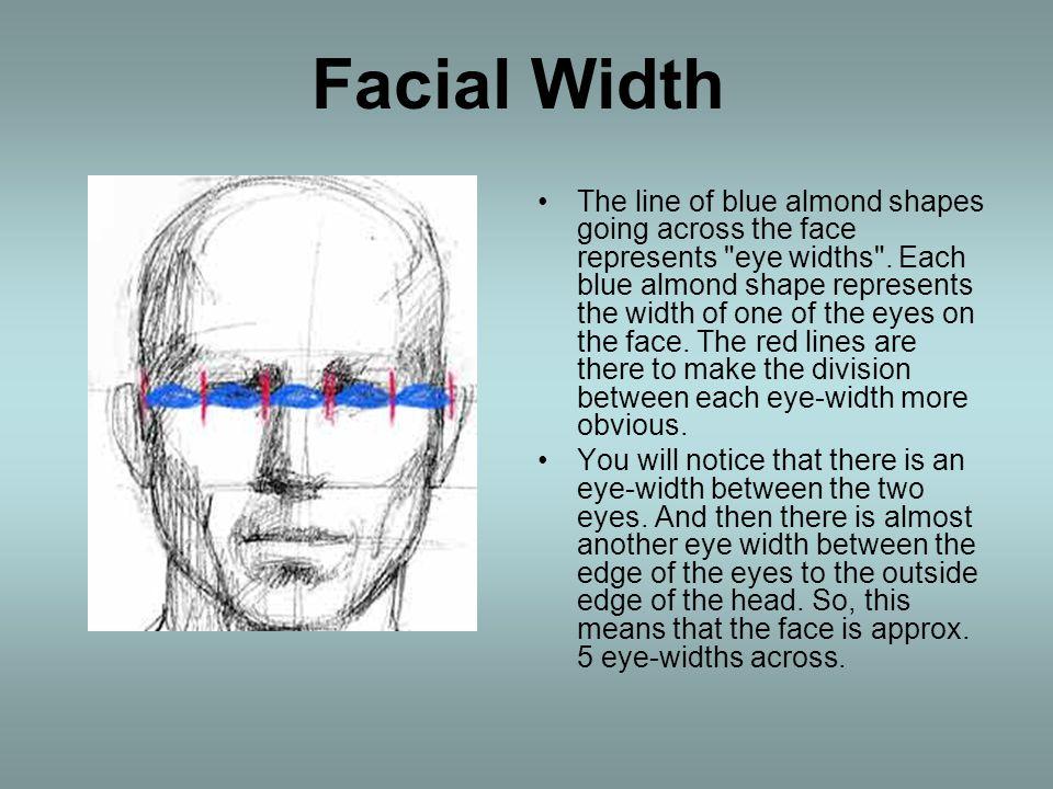 Facial Width