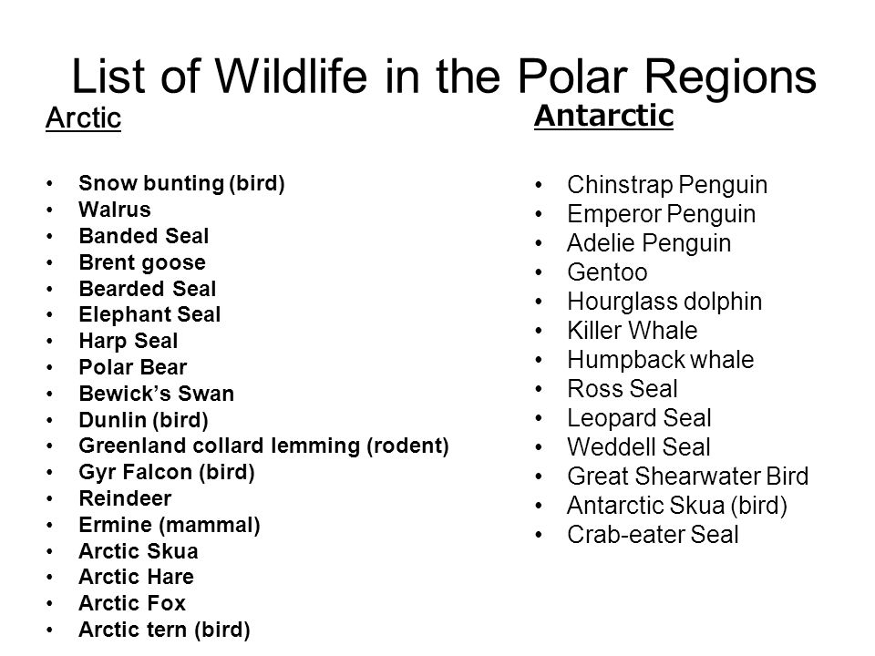 List of Wildlife in the Polar Regions