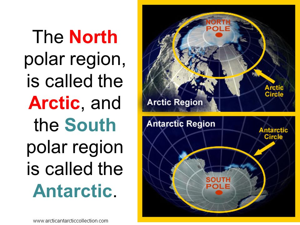 The North polar region, is called the Arctic, and the South polar region is called the Antarctic.