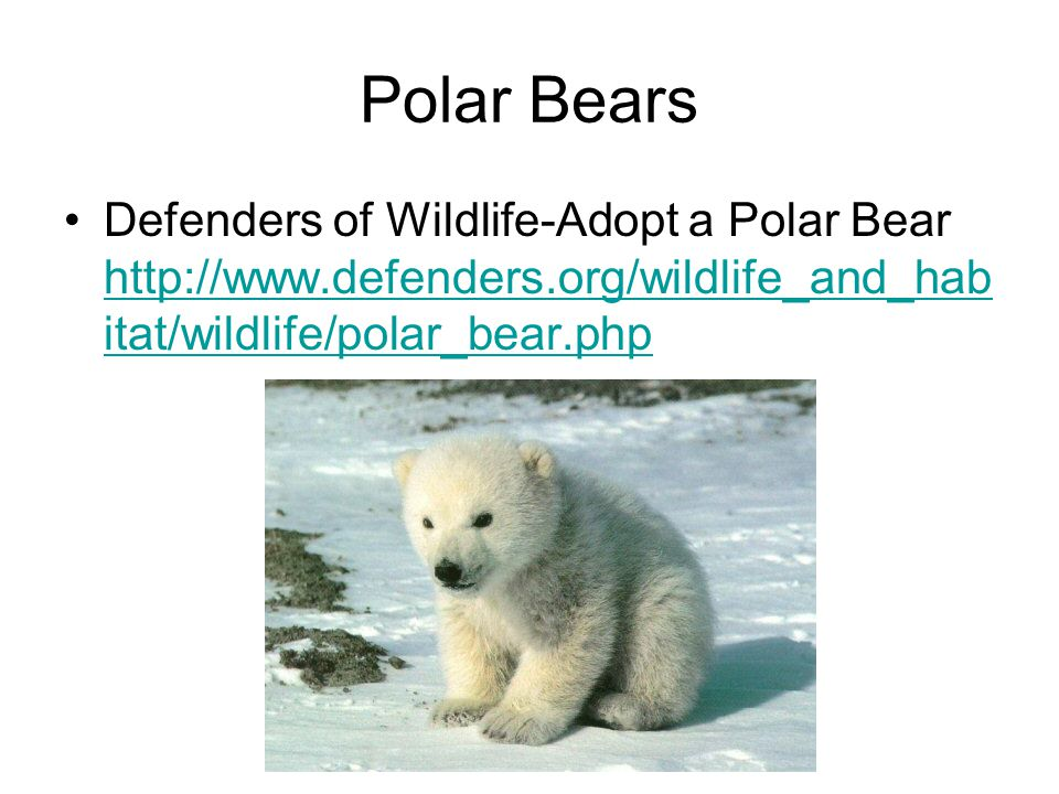 Polar Bears Defenders of Wildlife-Adopt a Polar Bear http://www.defenders.org/wildlife_and_habitat/wildlife/polar_bear.php.