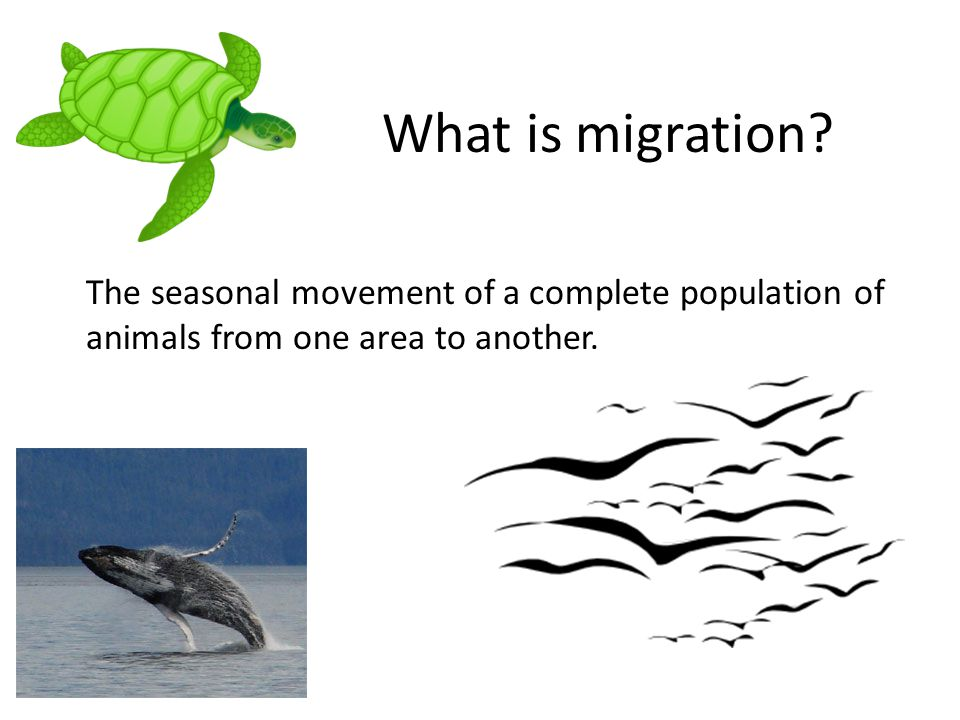 What is migration.