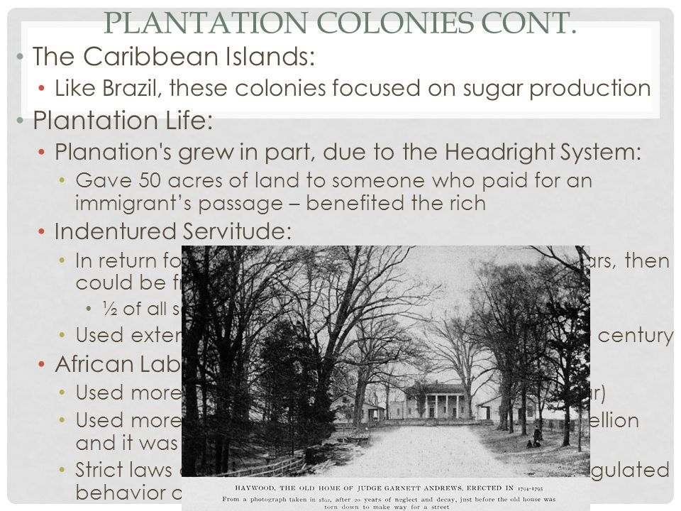 Plantation Colonies Cont.