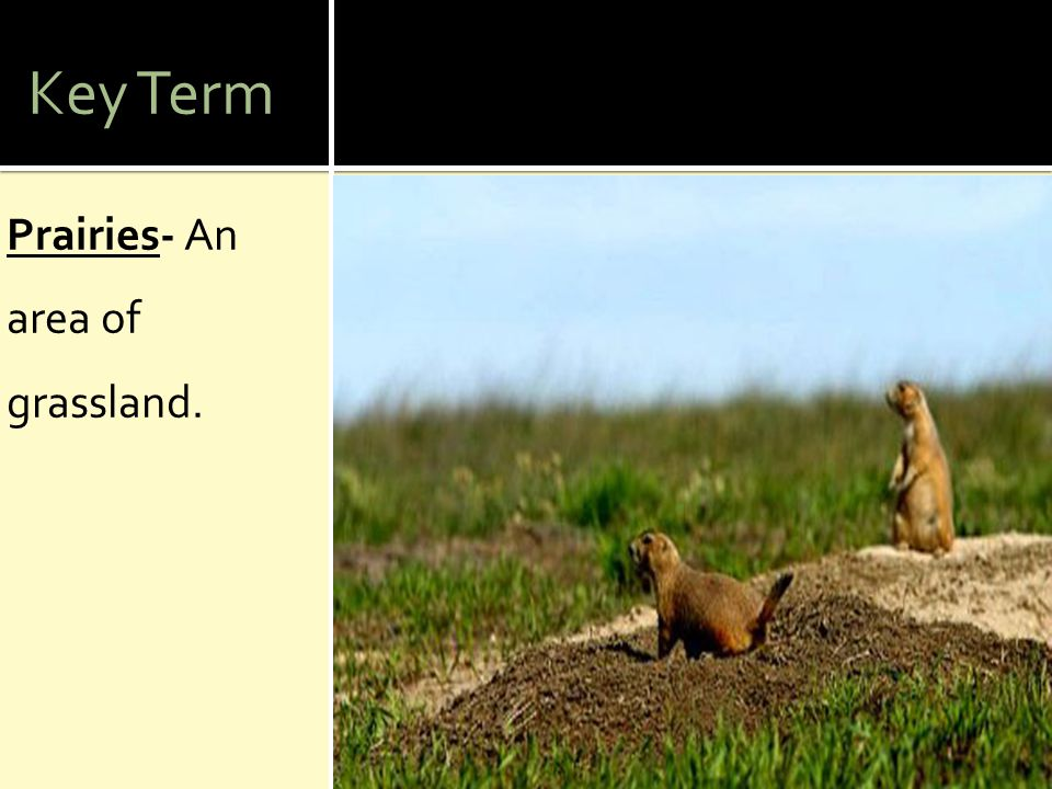 Key Term Prairies- An area of grassland.