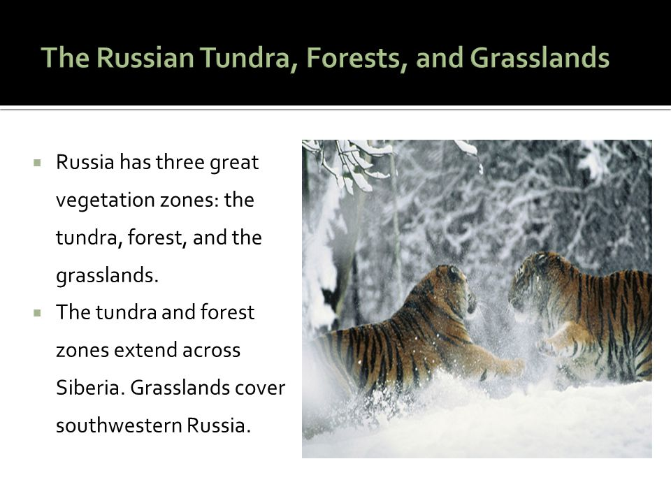 The Russian Tundra, Forests, and Grasslands
