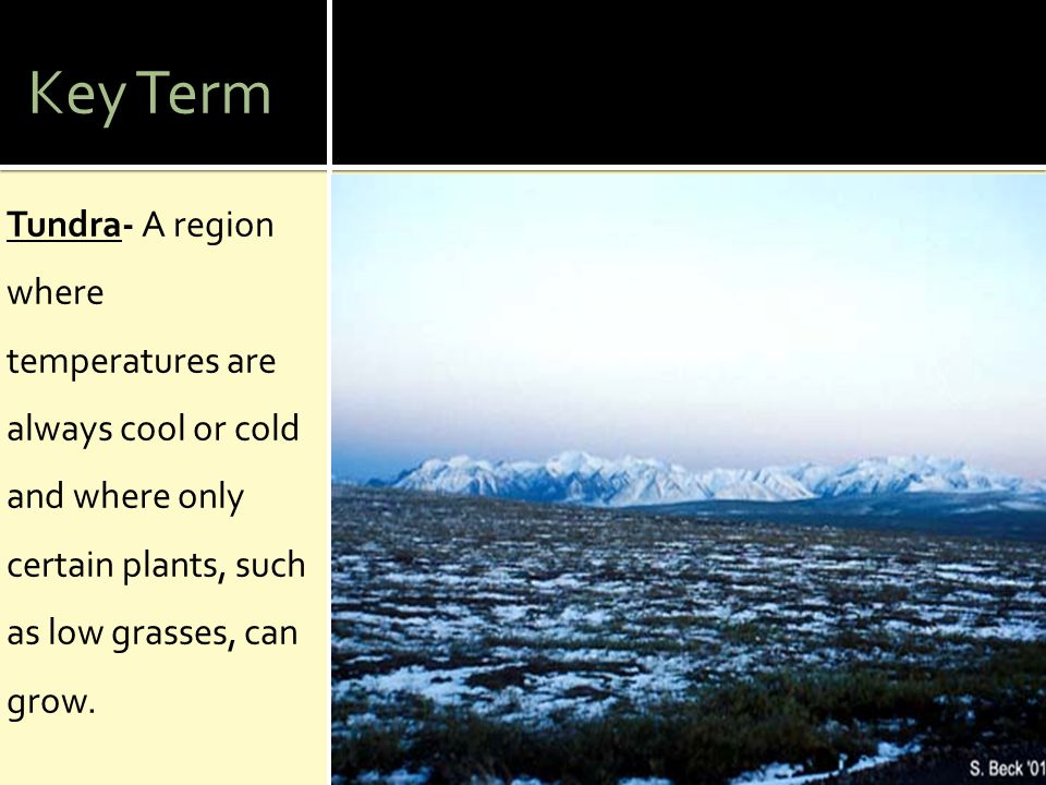 Key Term Tundra- A region where temperatures are always cool or cold and where only certain plants, such as low grasses, can grow.