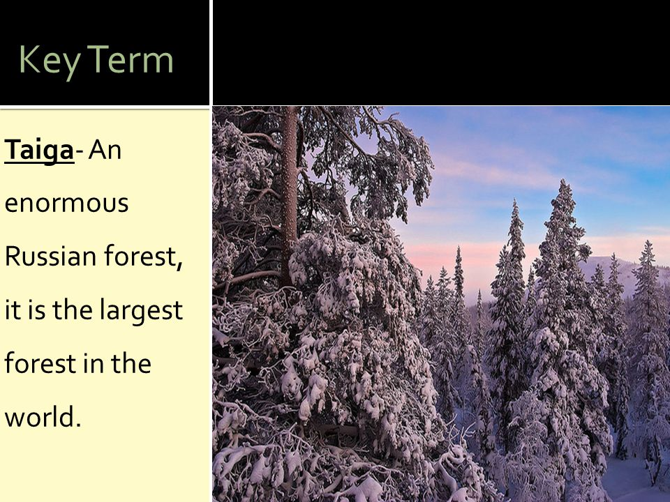 Key Term Taiga- An enormous Russian forest, it is the largest forest in the world.