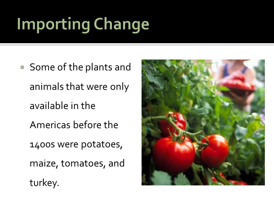 Importing Change Some of the plants and animals that were only available in the Americas before the 1400s were potatoes, maize, tomatoes, and turkey.