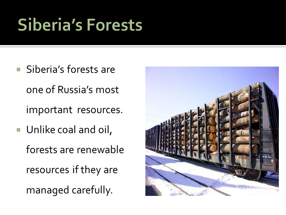 Siberia's Forests Siberia's forests are one of Russia's most important resources.