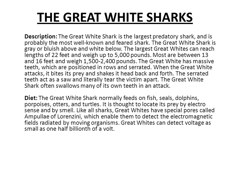 THE GREAT WHITE SHARKS