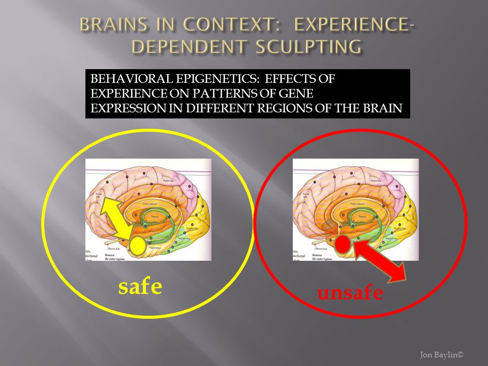 BRAINS IN CONTEXT: EXPERIENCE-DEPENDENT SCULPTING
