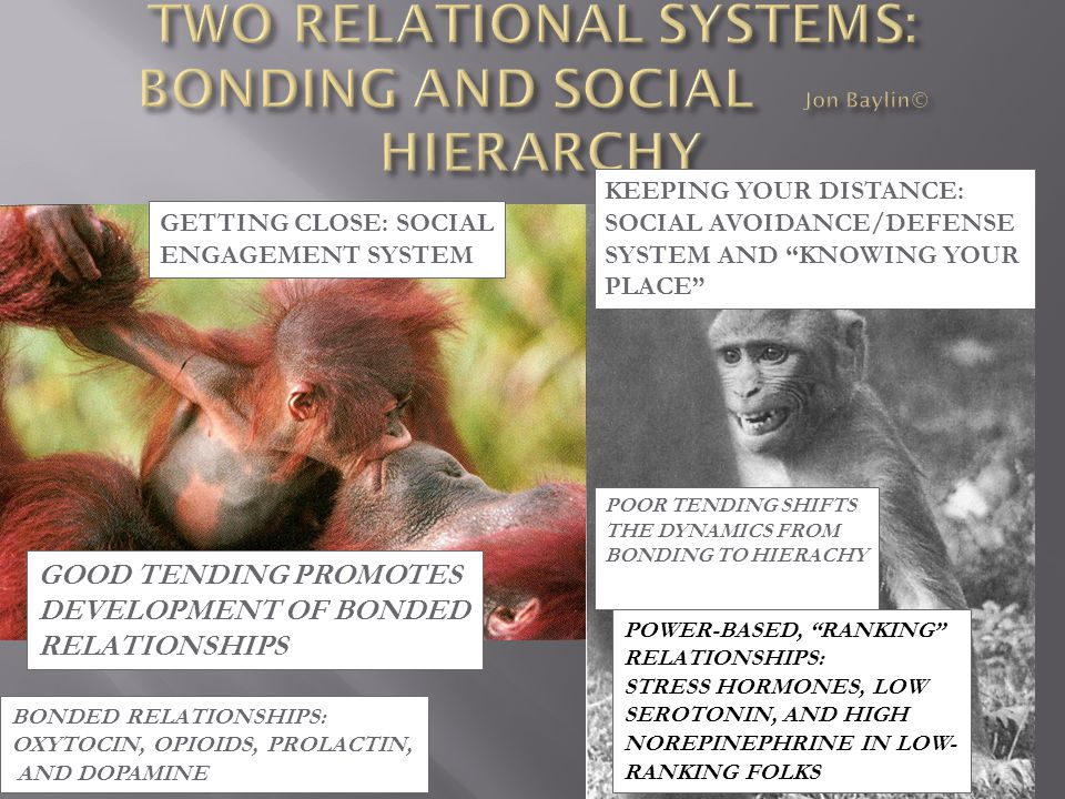TWO RELATIONAL SYSTEMS: BONDING AND SOCIAL Jon Baylin© HIERARCHY