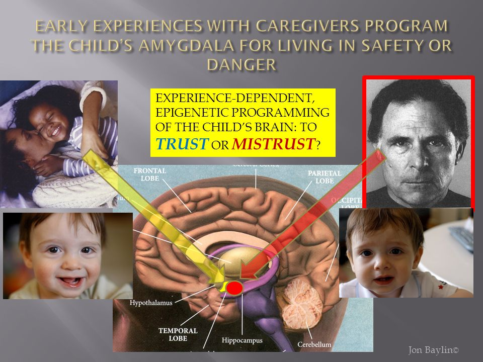 EARLY EXPERIENCES WITH CAREGIVERS PROGRAM THE CHILD'S AMYGDALA FOR LIVING IN SAFETY OR DANGER