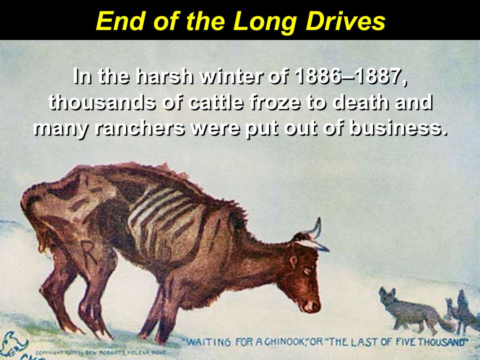 End of the Long Drives In the harsh winter of 1886–1887, thousands of cattle froze to death and many ranchers were put out of business.